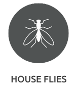 house flies pest control services mumbai