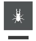 pest control service provider for termites